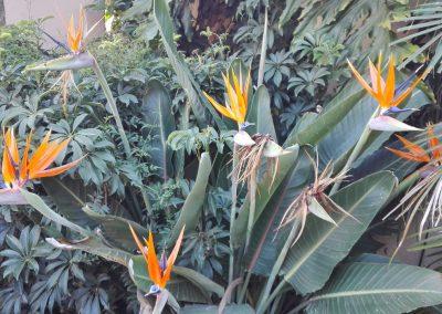 morning-hill-accommodation-Garden-Flowers-2