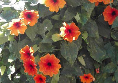 royal-oak-guest-house-Flowers